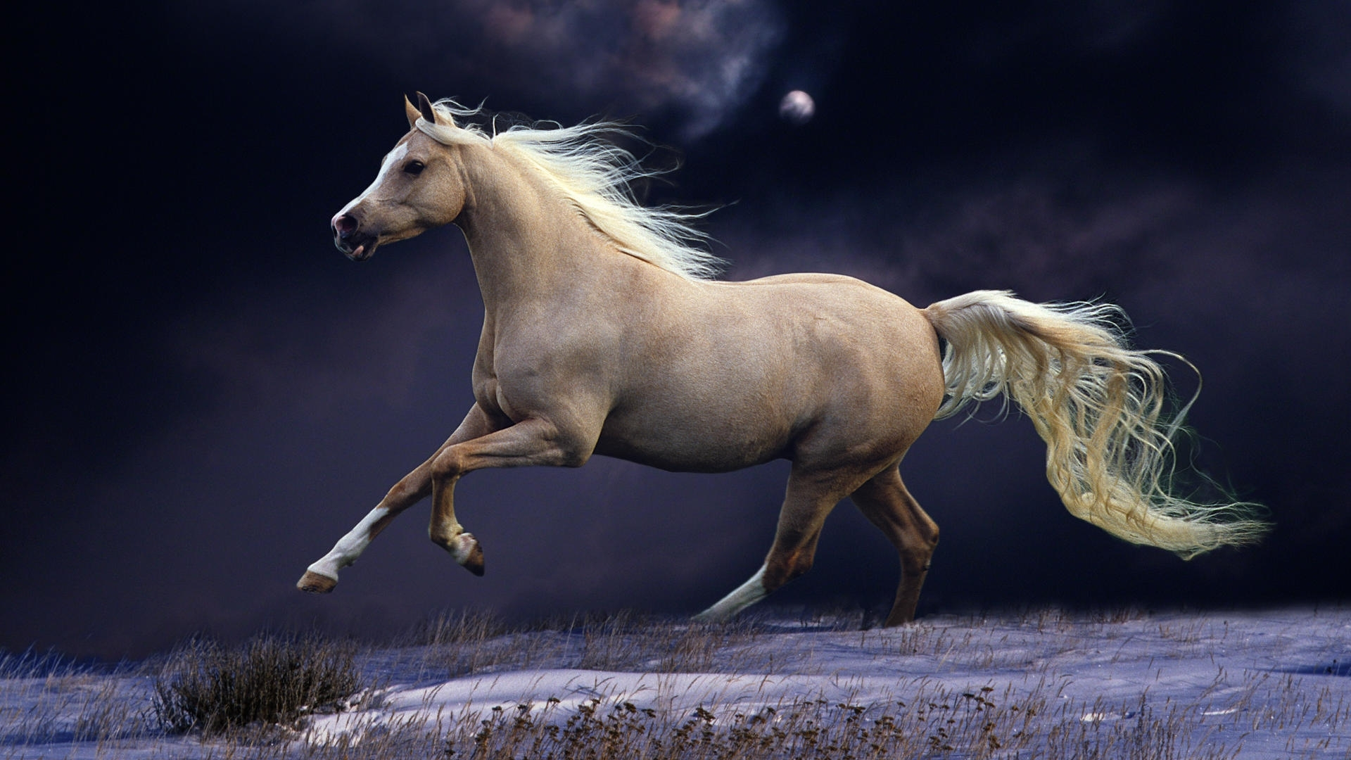 horse wallpapers | best wallpapers