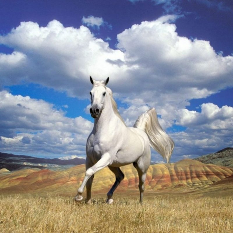 10 Best Horses Pics For Backgrounds FULL HD 1920×1080 For PC Desktop 2021 free download horse wallpapers hd pictures free download hd walls 800x800