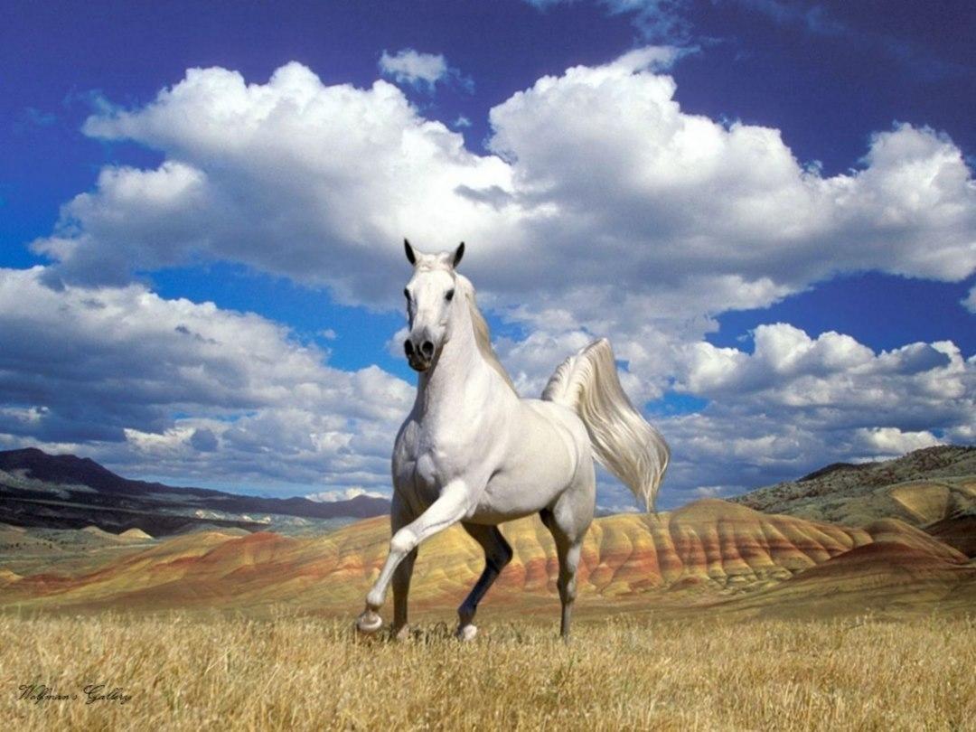 10 best horses pics for backgrounds full hd 1920×1080 for pc desktop