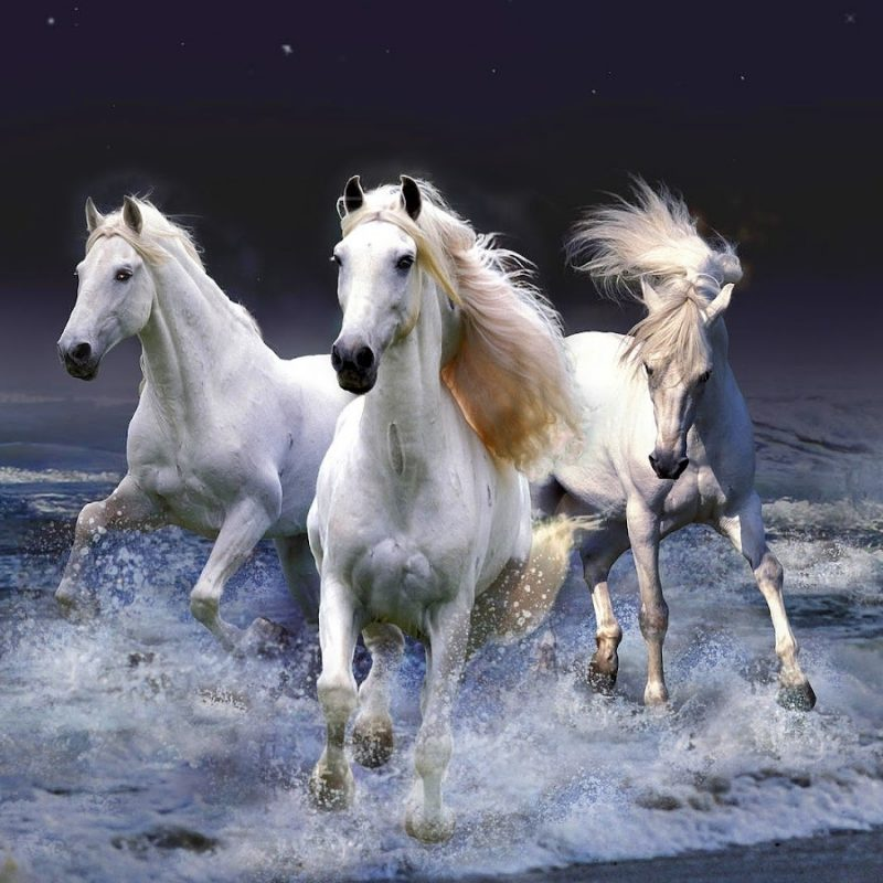 10 Latest Pictures Of White Horses Running FULL HD 1920×1080 For PC Background 2018 free download horses hd animal wallpaper of white horses running through water 800x800