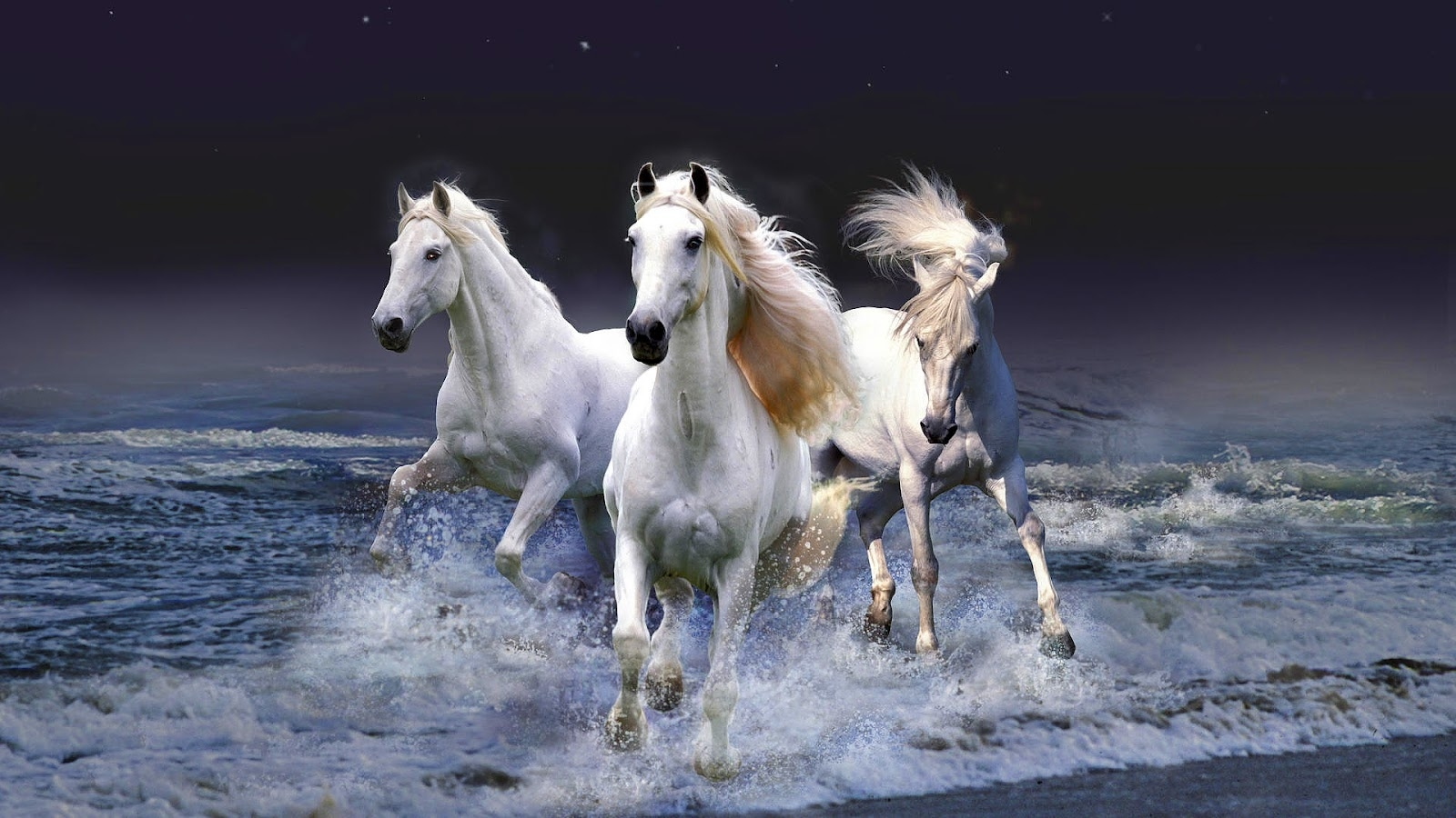 horses | hd animal wallpaper of white horses running through water