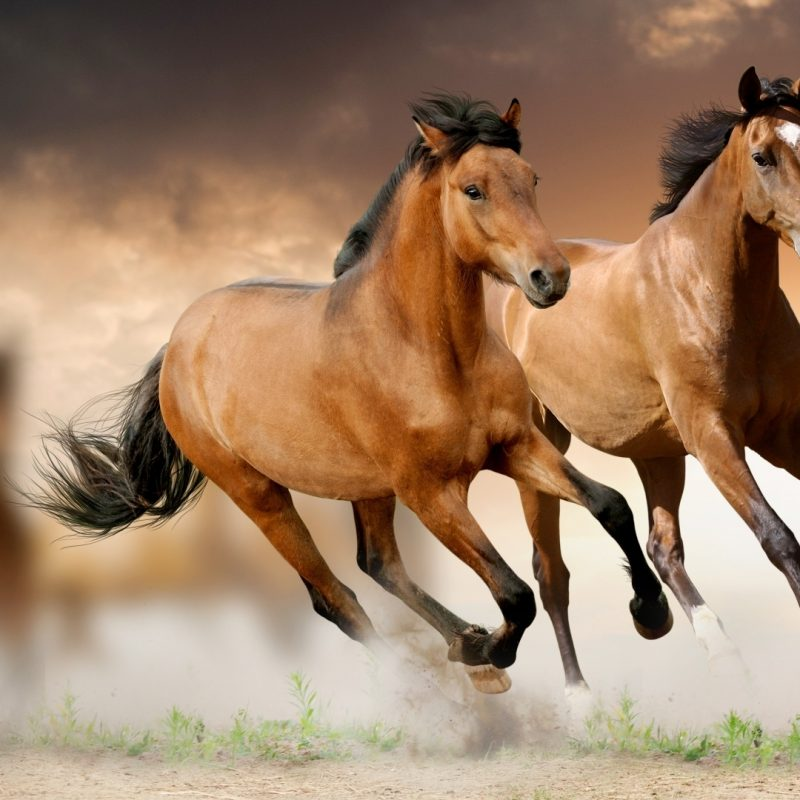 10 Latest Horse Backgrounds For Computers FULL HD 1920×1080 For PC Background 2021 free download horses wallpapers 40 best inspirational high quality horses 800x800