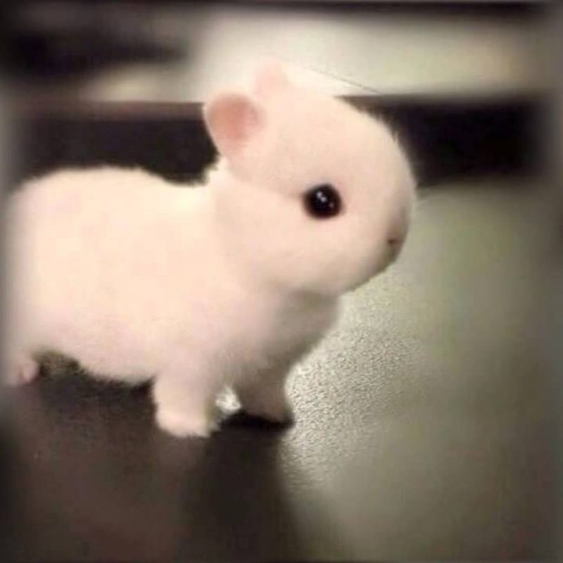10 Most Popular Cute Baby Bunny Images FULL HD 1920×1080 For PC Desktop 2021 free download how adorable is this little baby bunny hes so tiny and cute he 800x800