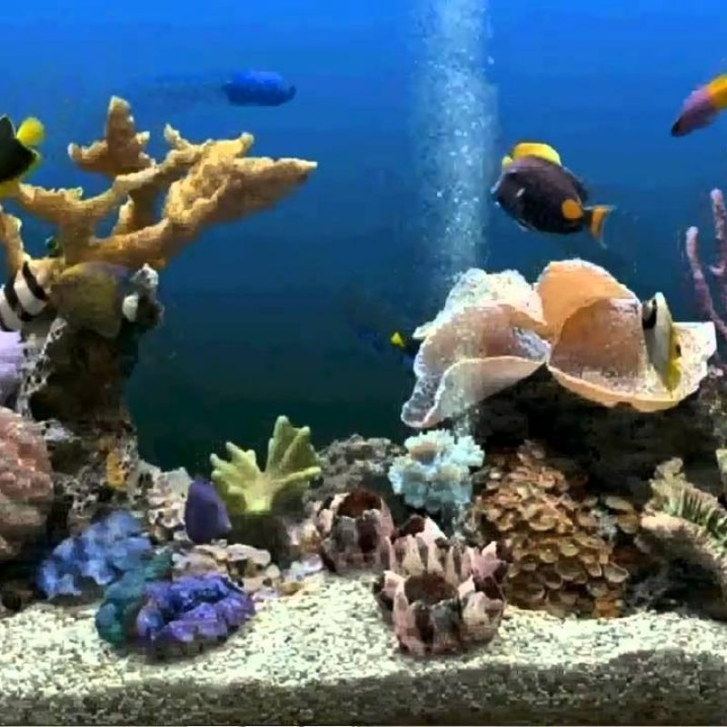 10 Latest Fish Tank Background Wallpaper FULL HD 1920×1080 For PC Background 2020 free download how to get an aquarium as your desktop background xp vista 800x800