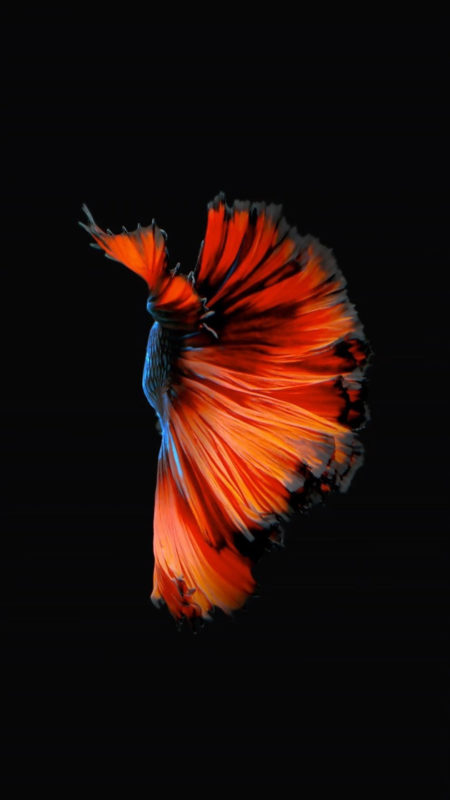 10 Latest Iphone Fish Wallpaper FULL HD 1080p For PC Desktop 2021 free download how to get apples live fish wallpapers back on your iphone ios 1 450x800