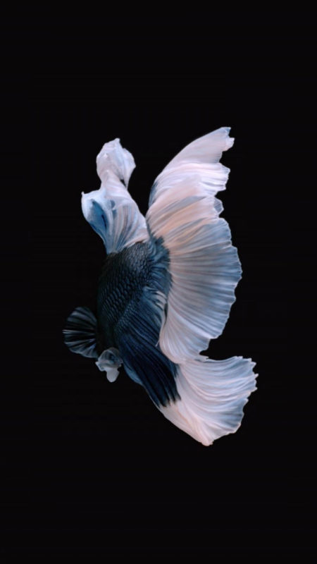 10 Latest Iphone Fish Wallpaper FULL HD 1080p For PC Desktop 2021 free download how to get apples live fish wallpapers back on your iphone ios 2 450x800