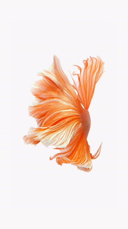10 Latest Iphone Fish Wallpaper FULL HD 1080p For PC Desktop 2021 free download how to get apples live fish wallpapers back on your iphone ios 450x800