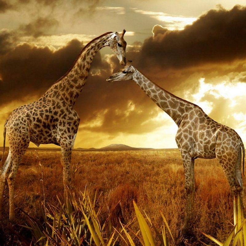 10 Best African Safari Animals Wallpaper FULL HD 1920×1080 For PC Desktop 2020 free download hq japan nature rain fall wallpapers hd desktop wallpapers hd 800x800