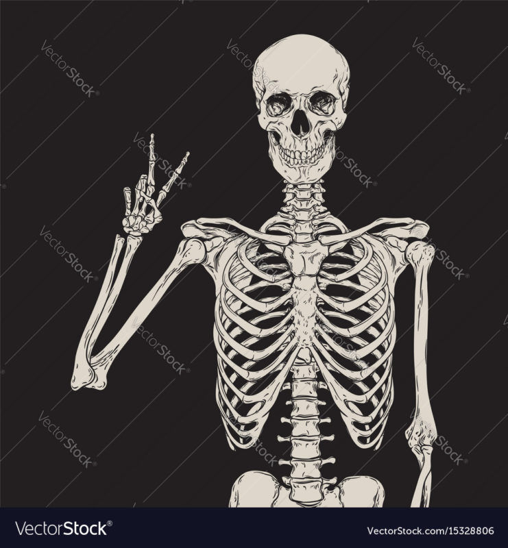 10 Most Popular Human Skelton Pictures FULL HD 1080p For PC Desktop 2020 free download human skeleton posing over black background vector image 741x800