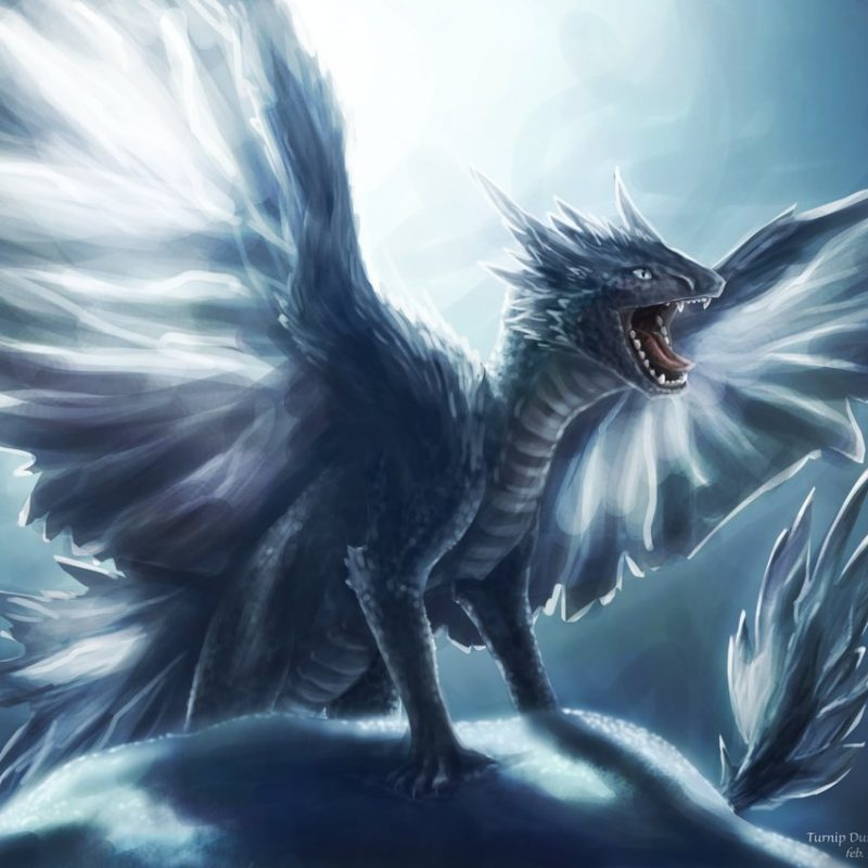 10 Most Popular Pictures Of Ice Dragon FULL HD 1920×1080 For PC Background 2018 free download ice dragon sibling 3turnipberry on deviantart 800x800