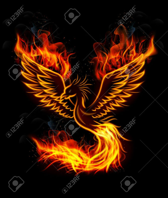 10 Latest Pics Of Phoenix FULL HD 1920×1080 For PC Desktop 2018 free download illustration of fire burning phoenix bird with black background 678x800