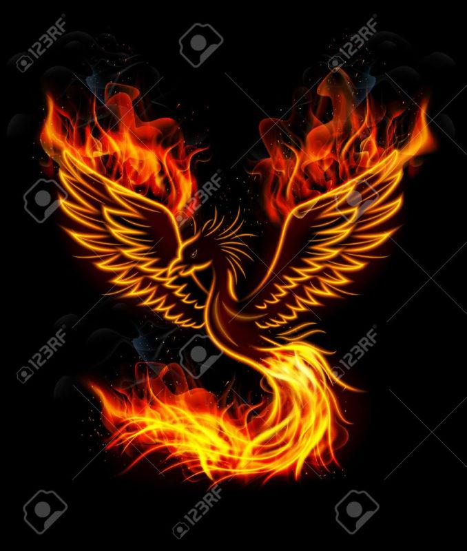 10 Latest Pics Of Phoenix FULL HD 1920×1080 For PC Desktop 2018 free download illustration of fire burning phoenix bird with black background 678x800