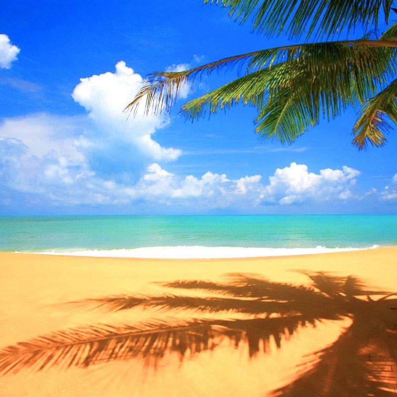 10 Most Popular Beautiful Beach Backgrounds Palm Trees FULL HD 1920×1080 For PC Desktop 2020 free download image for beautiful beach backgrounds high definition walf1003 800x800