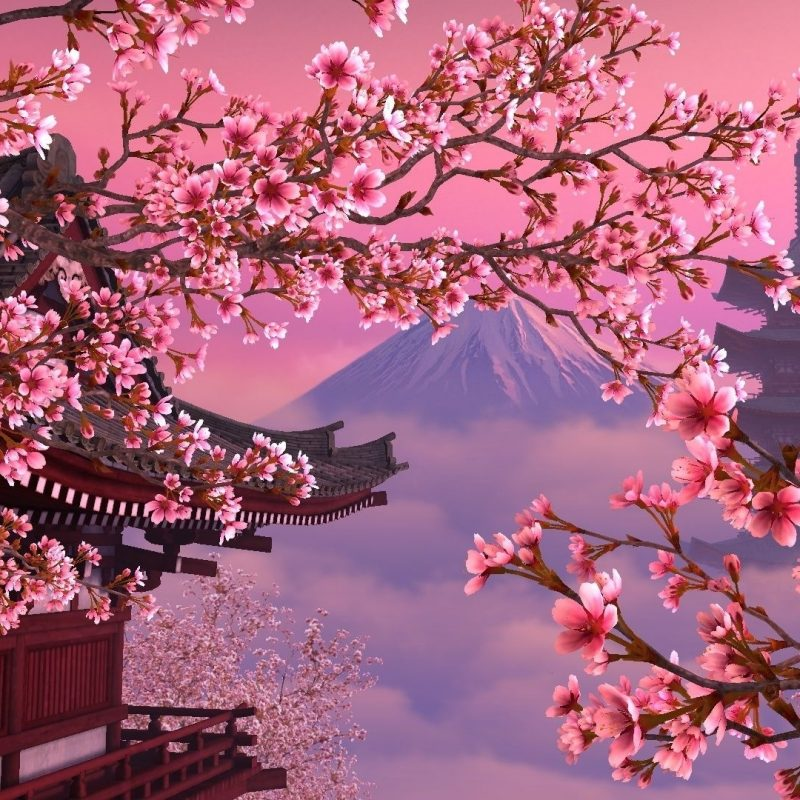 10 Best Cherry Blossom Desktop Backgrounds FULL HD 1080p For PC Background 2020 free download image for japan sakura wallpaper desktop background 65zs6 natura 1 800x800