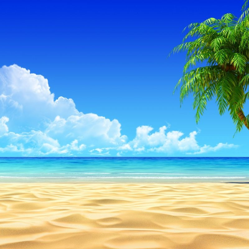 10 New Beach Palm Tree Background FULL HD 1080p For PC