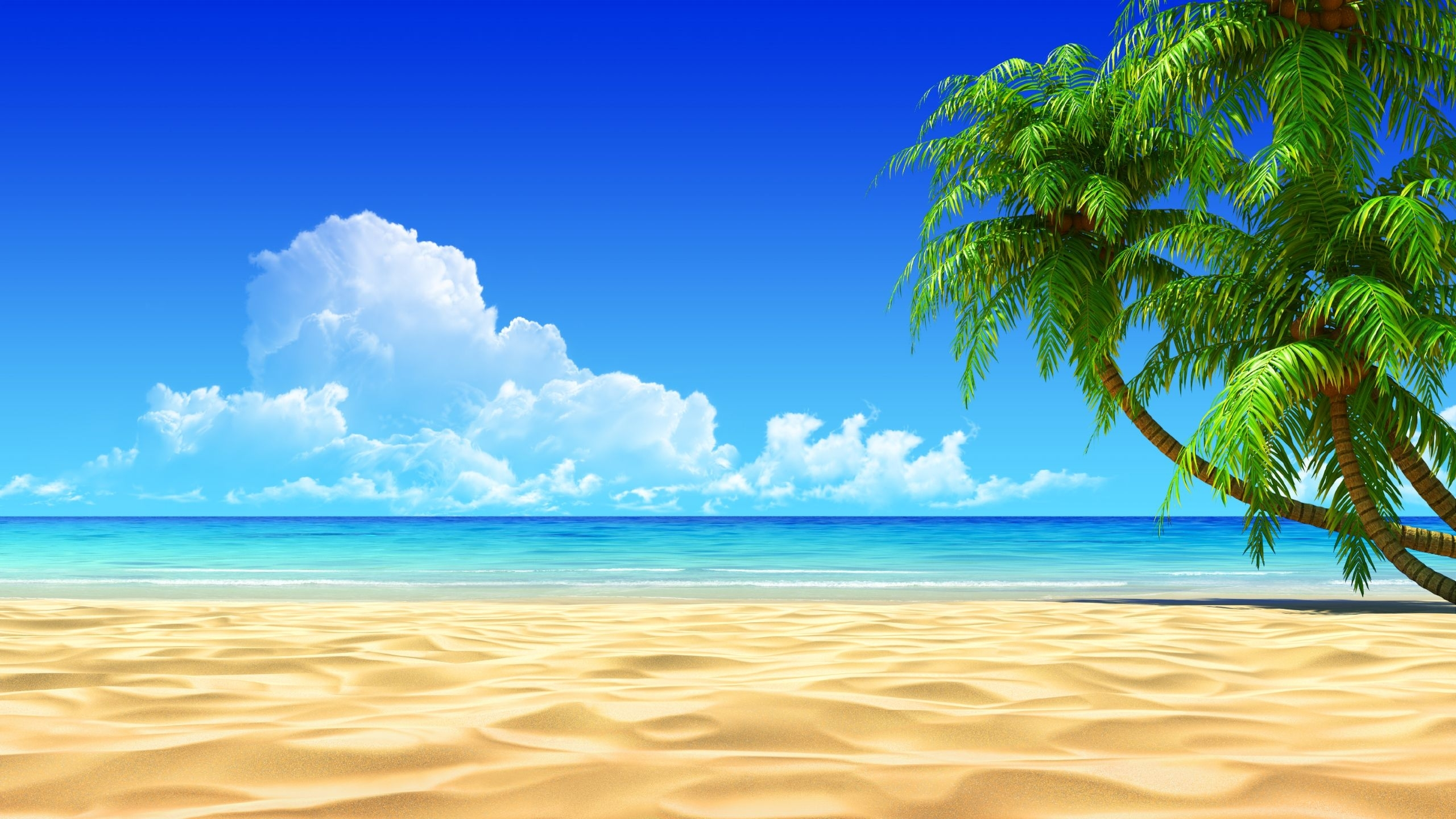 image for tropical beaches with palm trees wallpapers desktop