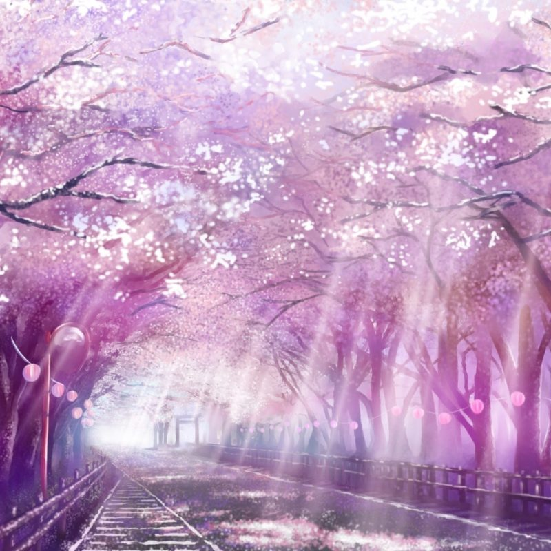 10 Most Popular Cherry Blossom Tree Anime Wallpaper FULL HD 1080p For PC Desktop 2018 free download image from http pcwallart images cherry blossom tree anime 1 800x800
