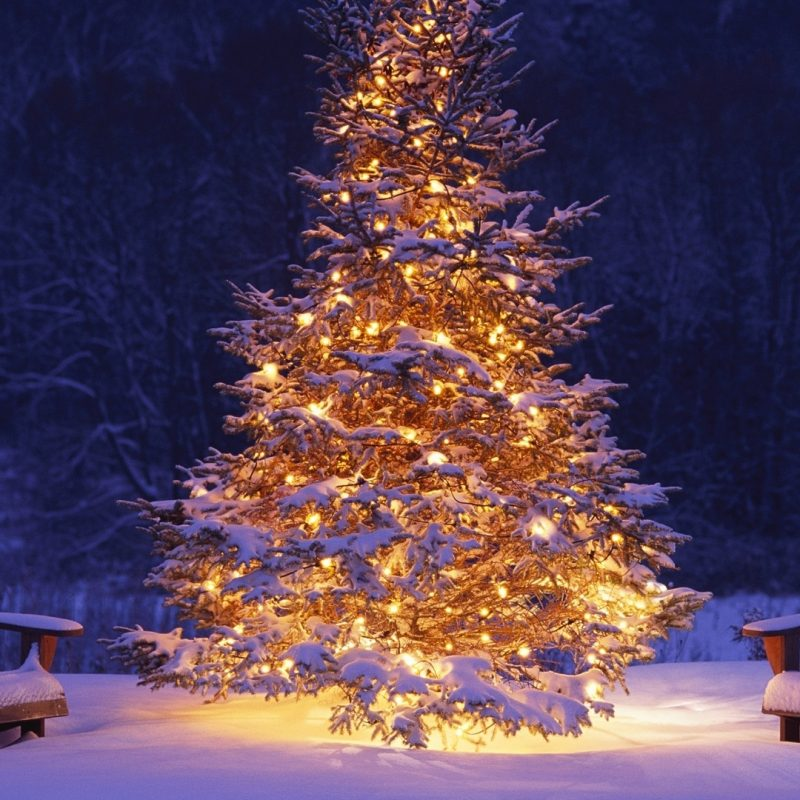 10 Most Popular Christmas Tree Snow Wallpaper Hd FULL HD 1080p For PC Desktop 2020 free download image hd wallpaper noel christmas 14 album wallpaper wallpapers 800x800