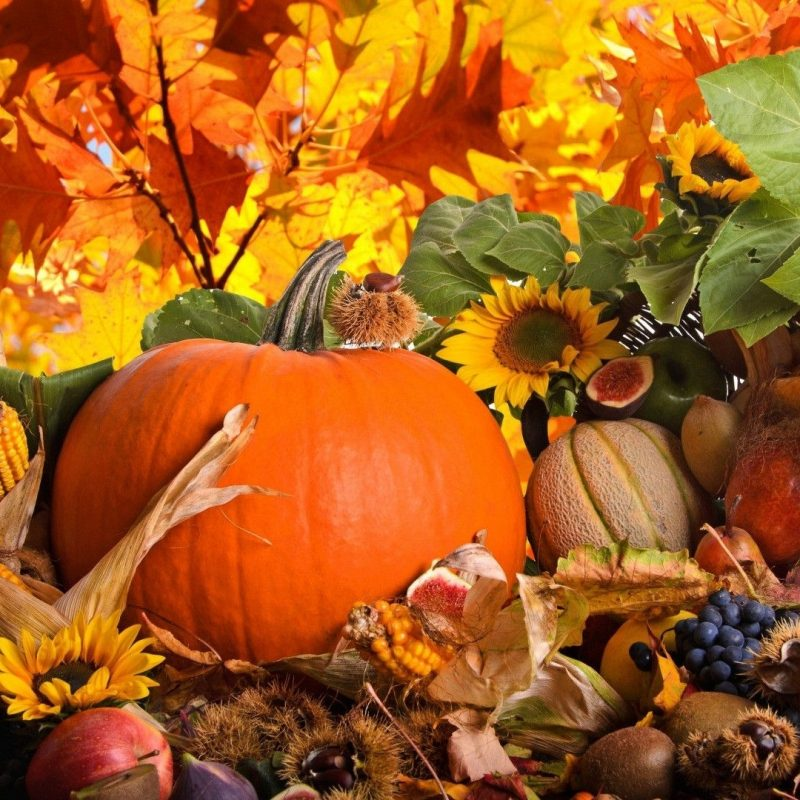 10 New Autumn Pumpkin Desktop Wallpaper FULL HD 1920×1080 For PC Background 2020 free download image result for autumn hd wallpaper autumn pinterest 800x800