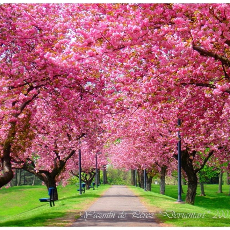 10 Latest Free Spring Screen Savers FULL HD 1080p For PC Background 2018 free download image result for free spring screensavers free screensavers 2 800x800