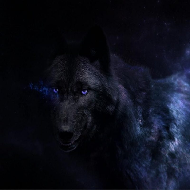 10 Latest Black Wolf Wallpaper Hd FULL HD 1920×1080 For PC Desktop 2018 free download image result for wolf wallpaper hd wolf pinterest wolf 800x800