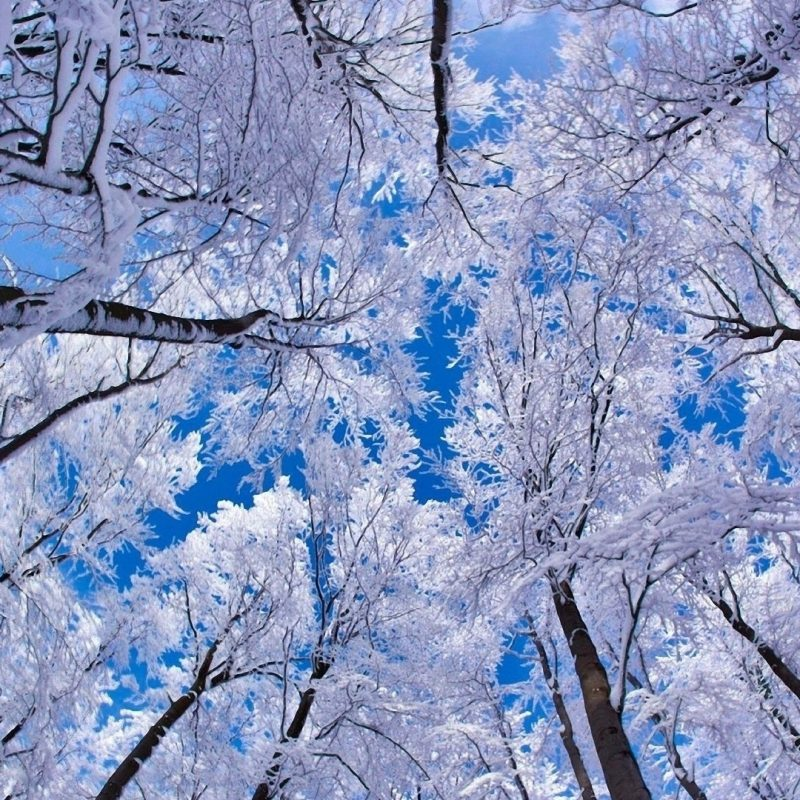 10 Most Popular Winter Wallpaper 1920X1080 FULL HD 1920×1080 For PC Desktop 2021 free download image wallpaper hd neige winter 2012031318 31 album neige winter 800x800