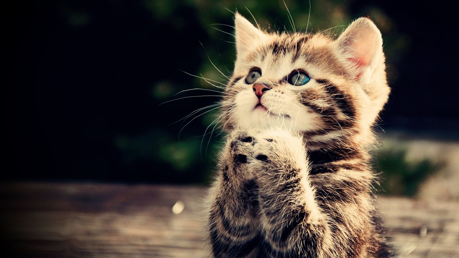images for > cute animals pictures with sayings | adorble | cute