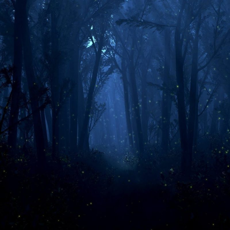 10 Top Woods At Night Wallpaper FULL HD 1920×1080 For PC Background 2020 free download in the woods at night mystical fantasy enchanting beautiful 800x800