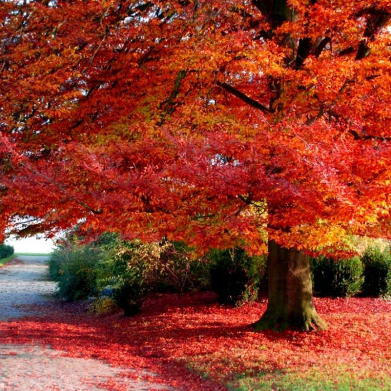 10 New Fall Images For Desktop FULL HD 1920×1080 For PC Background 2021 free download index of wp content uploads fall wallpapers desktop 800x800