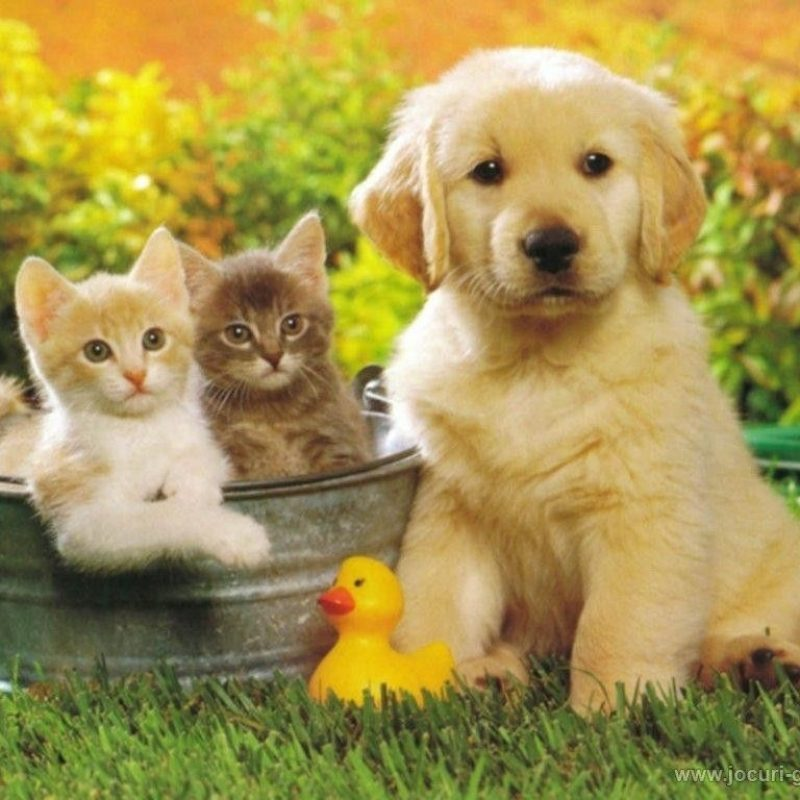 10 Best Dog And Cat Backgrounds FULL HD 1920×1080 For PC Background 2018 free download is there anything better than a playful puppy and a fluffy kitten 800x800