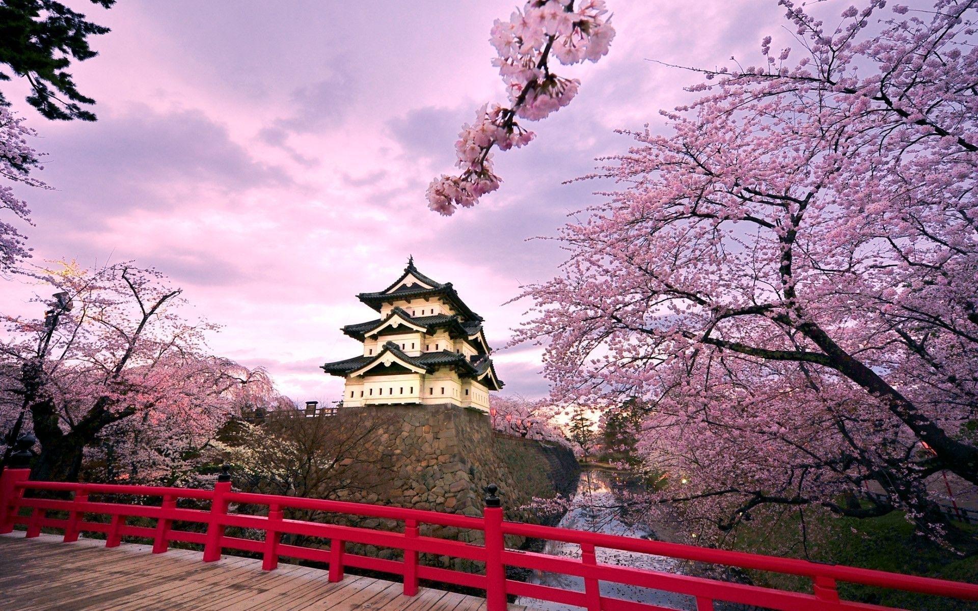 japan sakura wallpapers iphone flower wallpaper | hd wallpapers