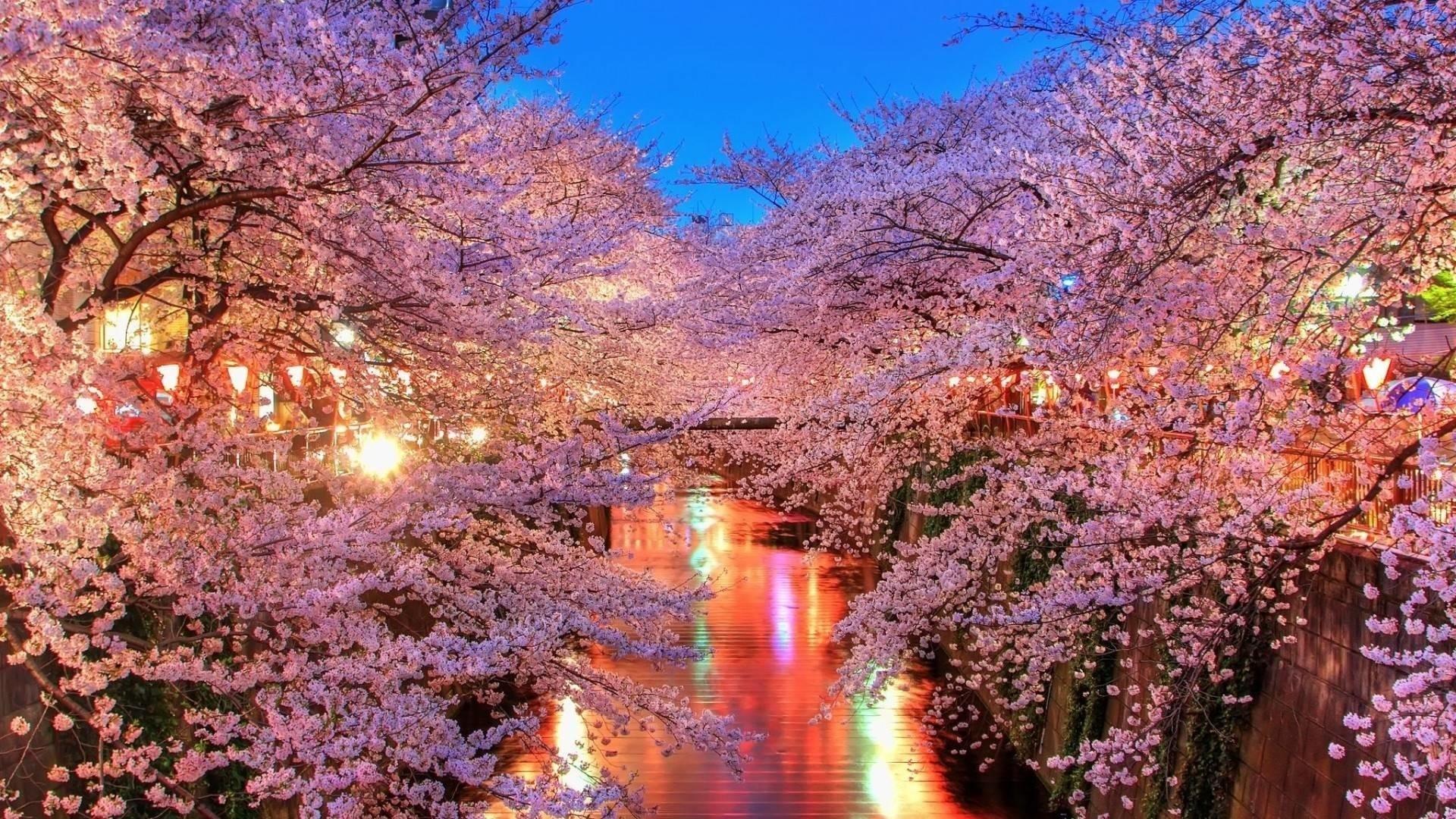 japanese cherry blossom wallpaper 1920x1080 (59+ images)