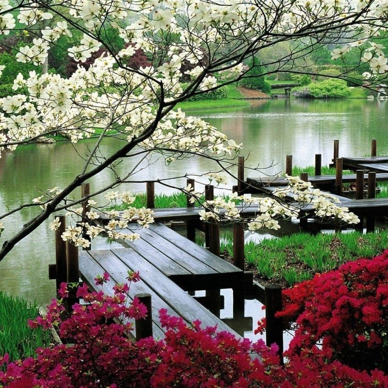 10 New Japanese Garden Desktop Wallpaper FULL HD 1080p For PC Background 2020 free download japanese garden desktop wallpapers wallpaper cave 800x800