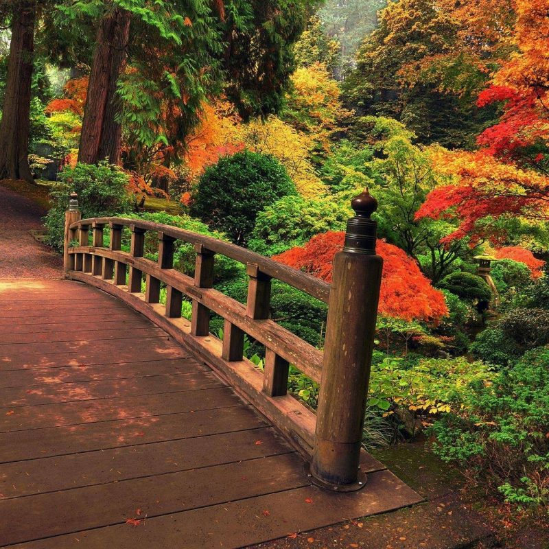 10 Top Japanese Garden Wallpaper Night FULL HD 1080p For PC Background 2018 free download japanese garden wallpaper night 800x800