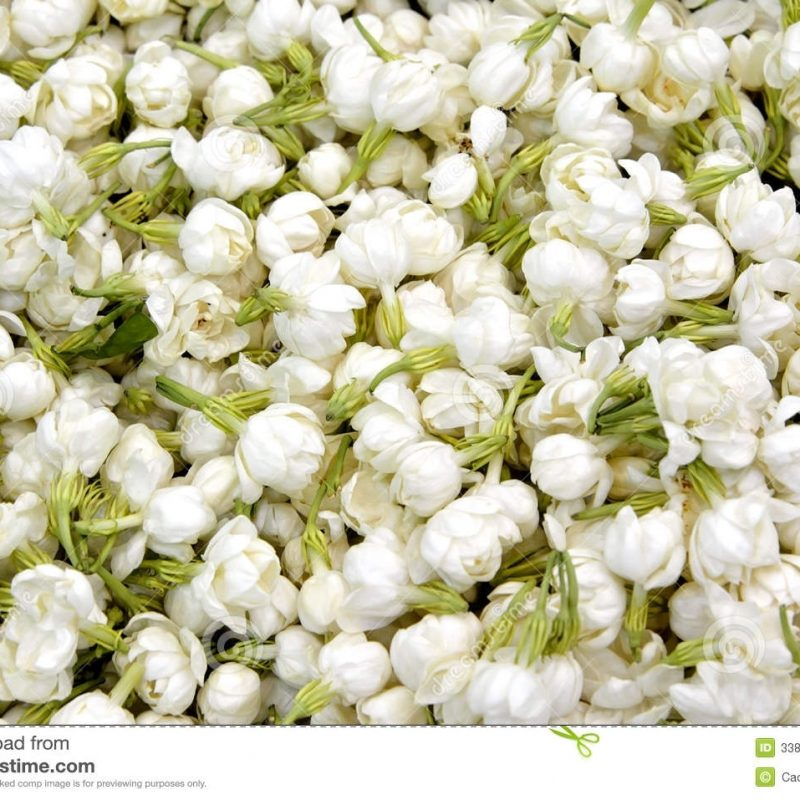 10 Latest Images Of Jasmine Flowers FULL HD 1080p For PC Background 2021 free download jasmine flower stock image image of flower detail texture 33804277 800x800
