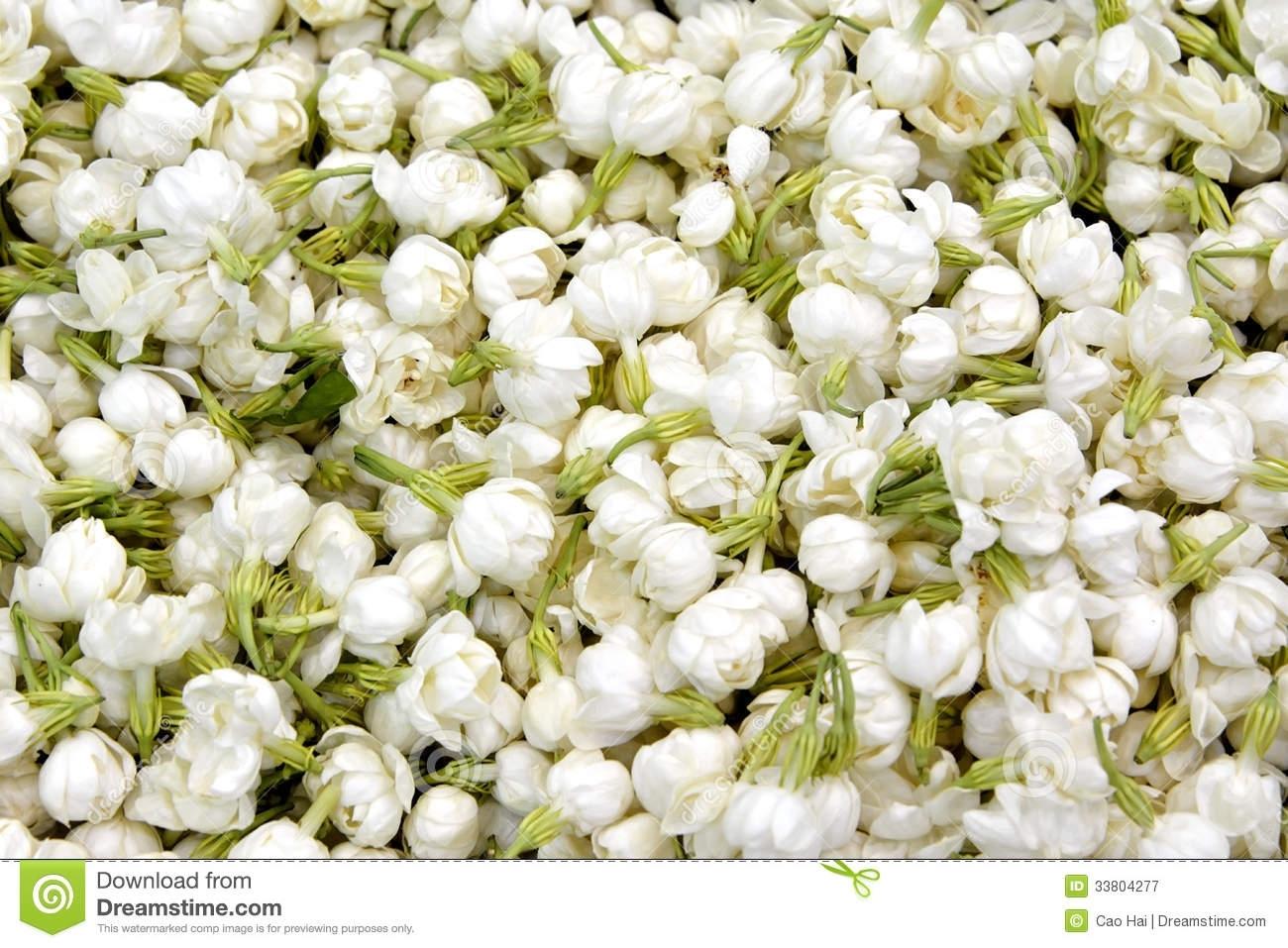jasmine flower stock image. image of flower, detail, texture - 33804277