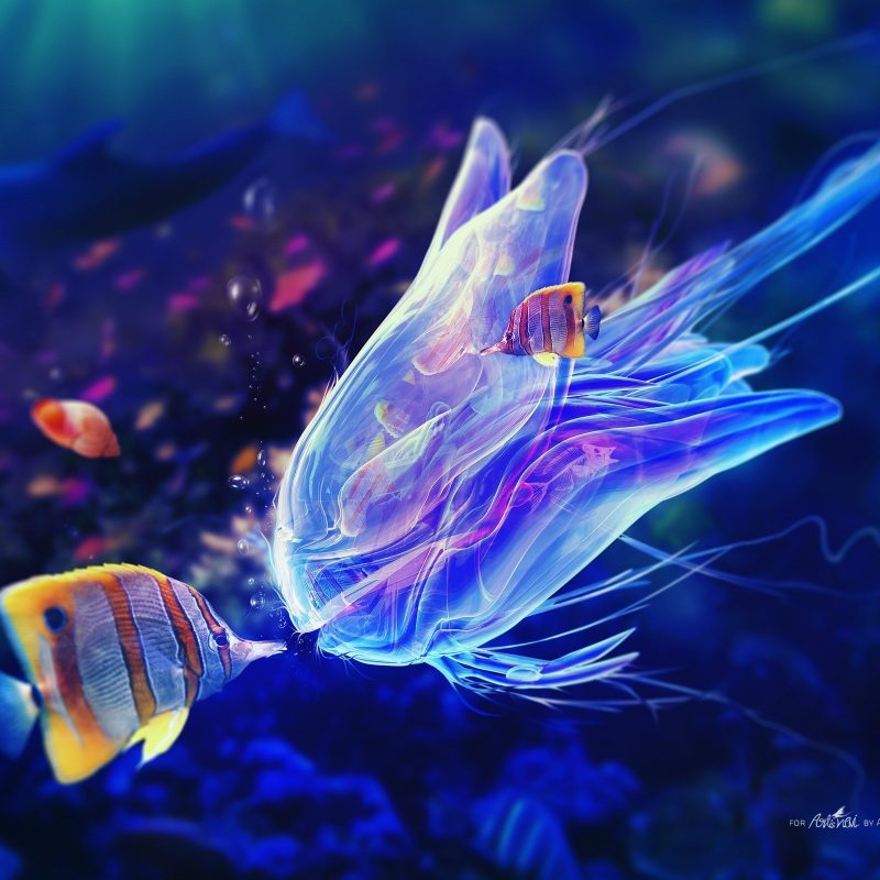 10 Latest Desktop Backgrounds Ocean Life FULL HD 1920×1080 For PC Background 2020 free download jelly fish kiss ocean life wallpapers new hd wallpapers 800x800