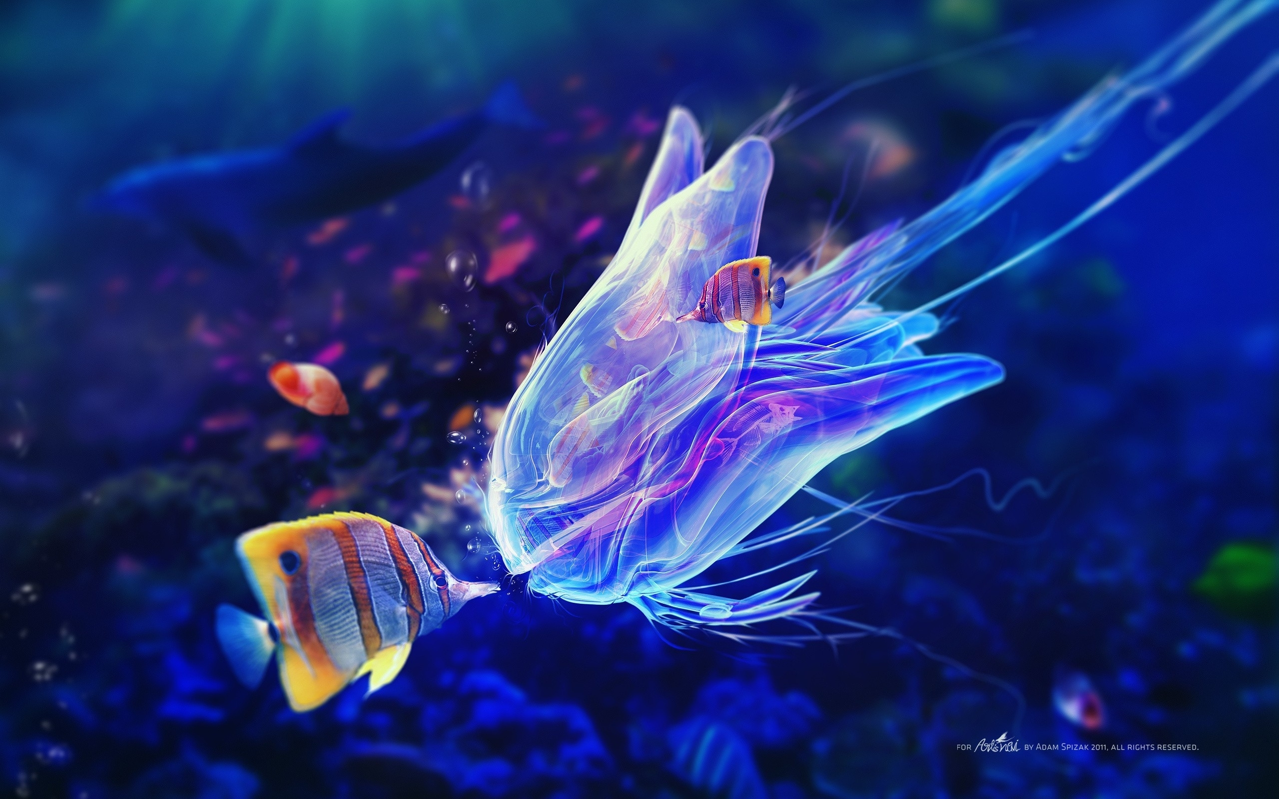 jelly fish kiss ocean life wallpapers - new hd wallpapers