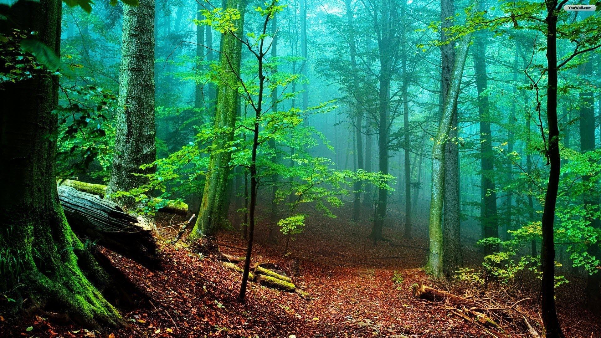 karditsa   man   pinterest   wallpaper, beautiful forest and forest