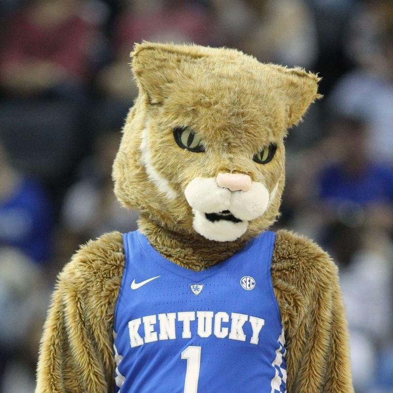 10 New Kentucky Wildcats Mascot Pictures FULL HD 1920×1080 For PC Desktop 2018 free download kentucky wildcats morning quickies tuesdays are better than mondays 800x800