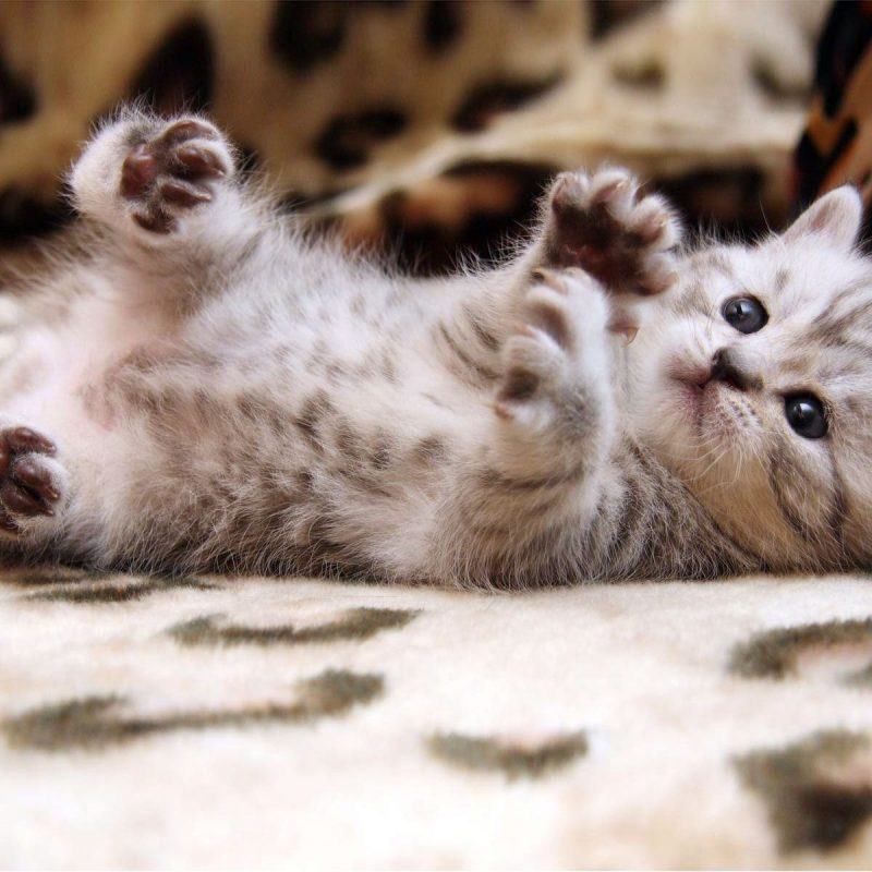 10 Top Cute Cat Wallpapers Hd FULL HD 1920×1080 For PC Background 2020 free download keywords cute cat wallpapers hd and tags 1600x1200 images of cute 800x800