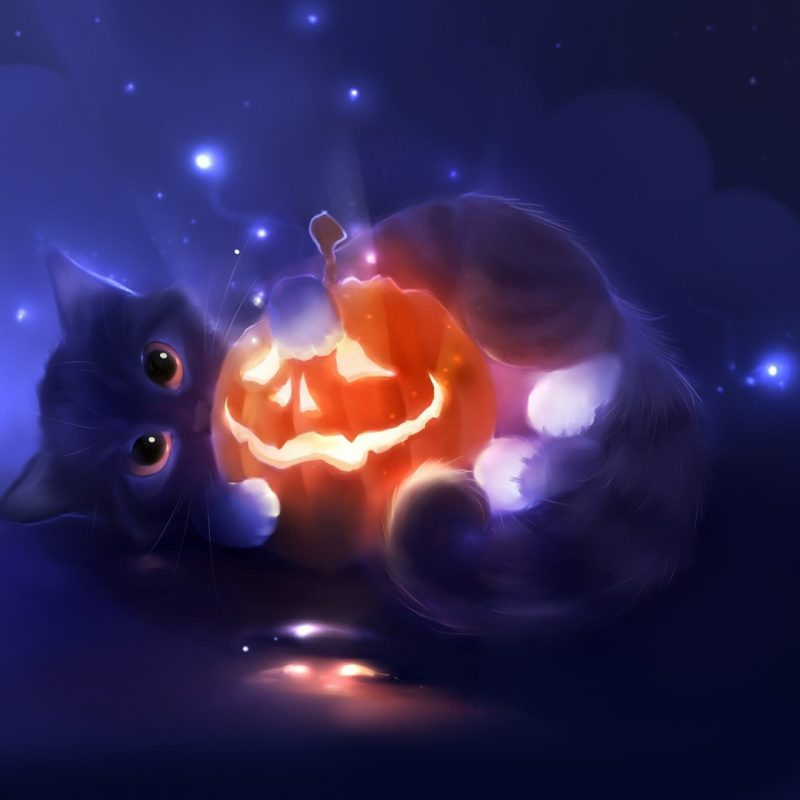 10 Top Cute Cat Halloween Wallpaper FULL HD 1920×1080 For PC Background 2018 free download kitten and a jack o lantern wallpaper 2865 800x800