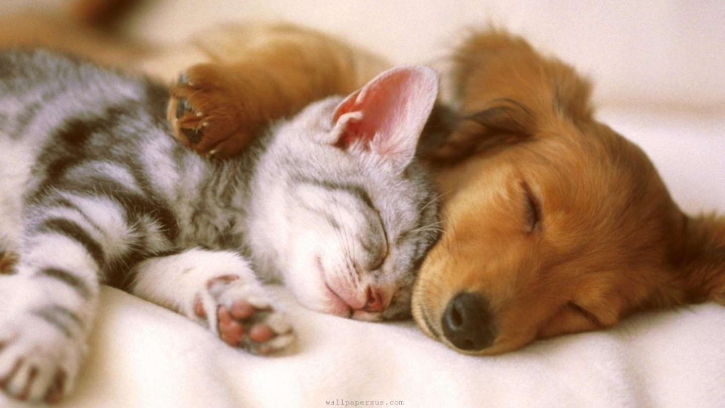 kitten and puppy wallpapers group (69+)