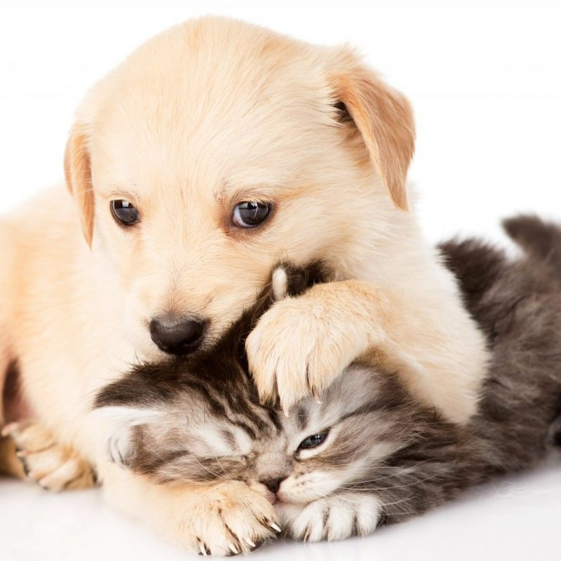 10 Top Puppy And Kitten Wallpaper FULL HD 1920×1080 For PC Background 2020 free download kitten and puppy wallpapers group 69 800x800