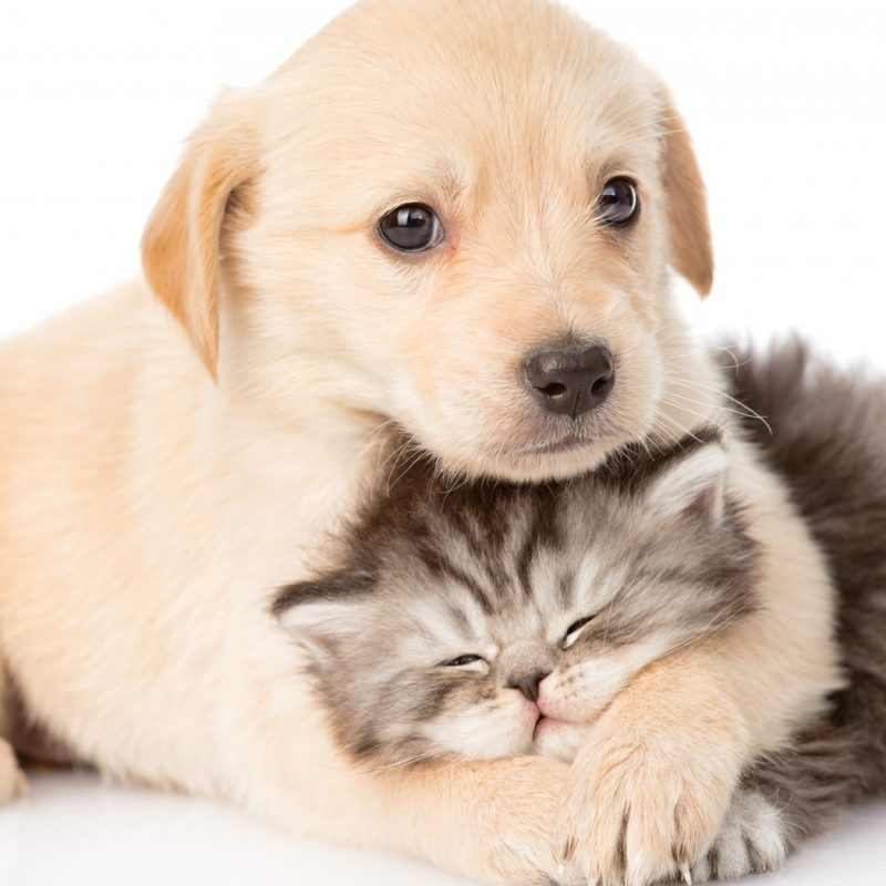 10 Latest Cute Dog And Cat Wallpaper Full Hd 1920 1080 For Pc