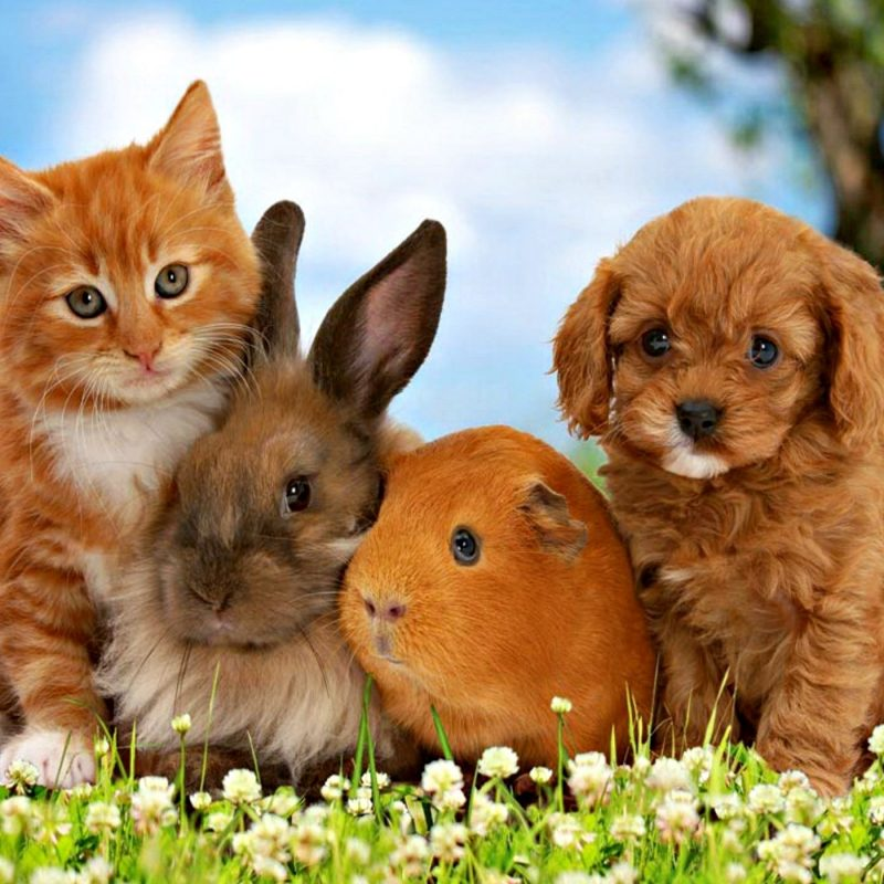 10 New Kitten And Puppies Wallpaper FULL HD 1080p For PC Desktop 2021 free download kittens and puppies wallpaper 800x800