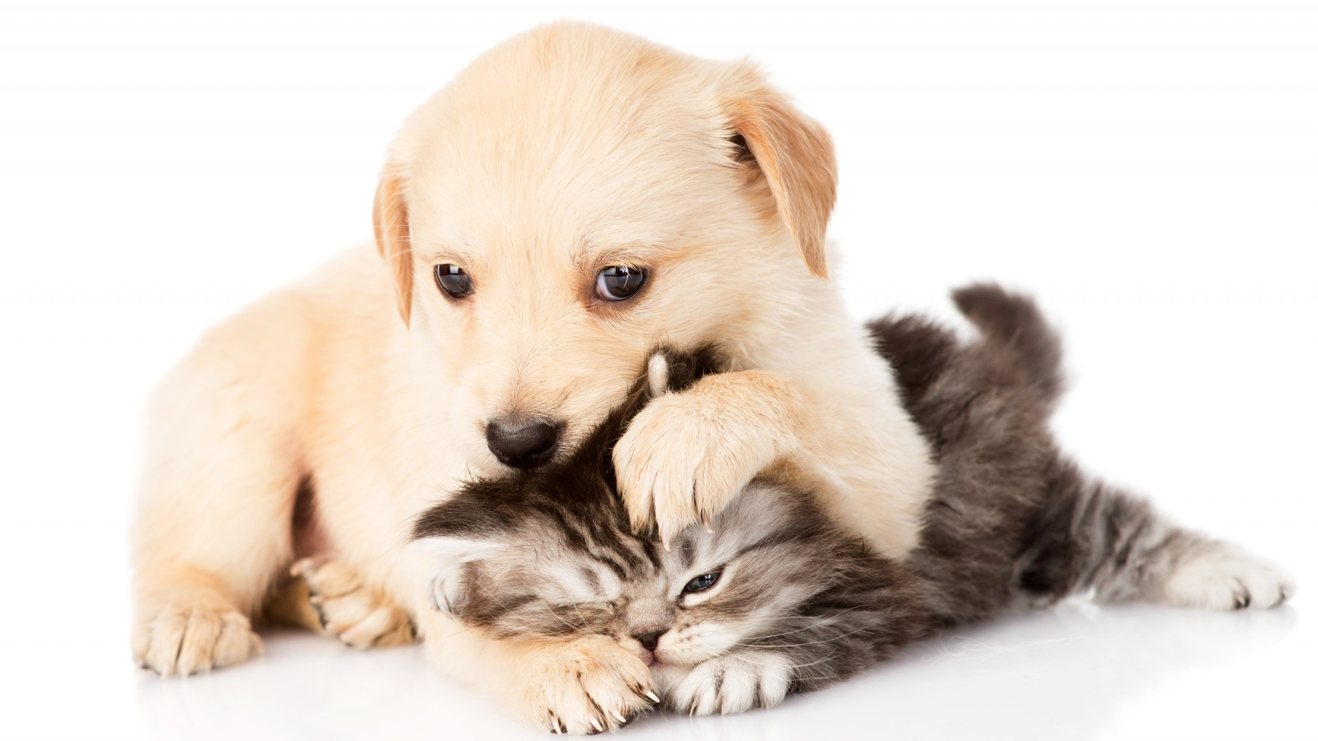 kittens and puppies wallpapers group (74+)