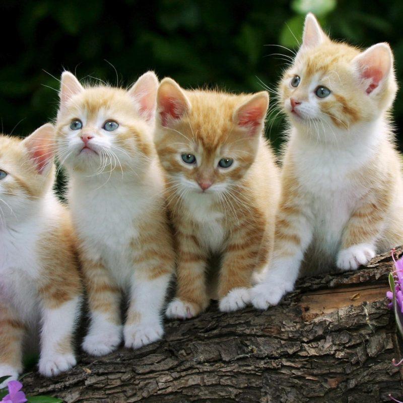 10 Best Cute Kittens Wallpapers For Desktop FULL HD 1080p For PC Desktop 2021 free download kittens e29da4 4k hd desktop wallpaper for 4k ultra hd tv e280a2 wide ultra 800x800