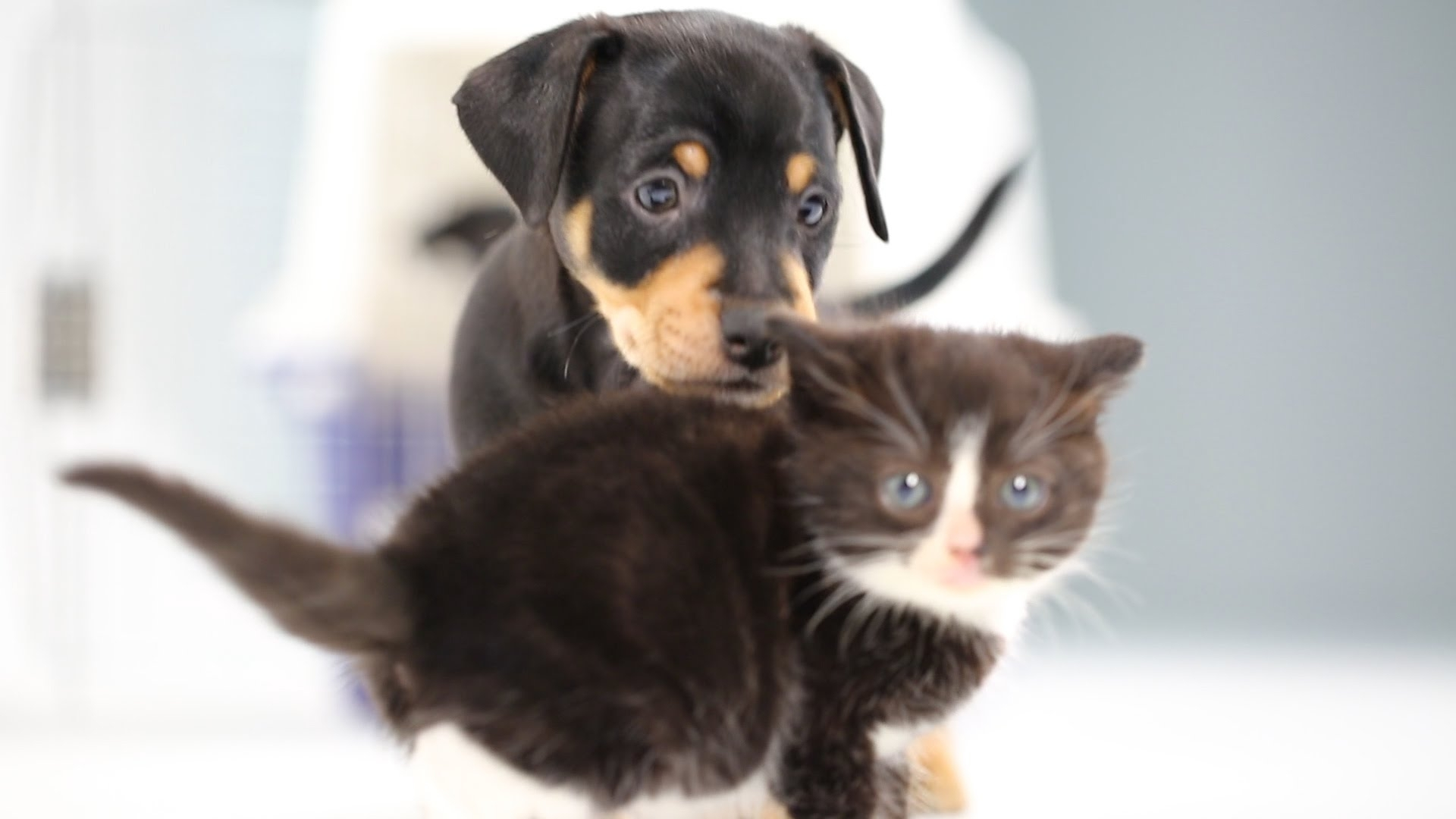 kittens meet puppies for the first time - youtube