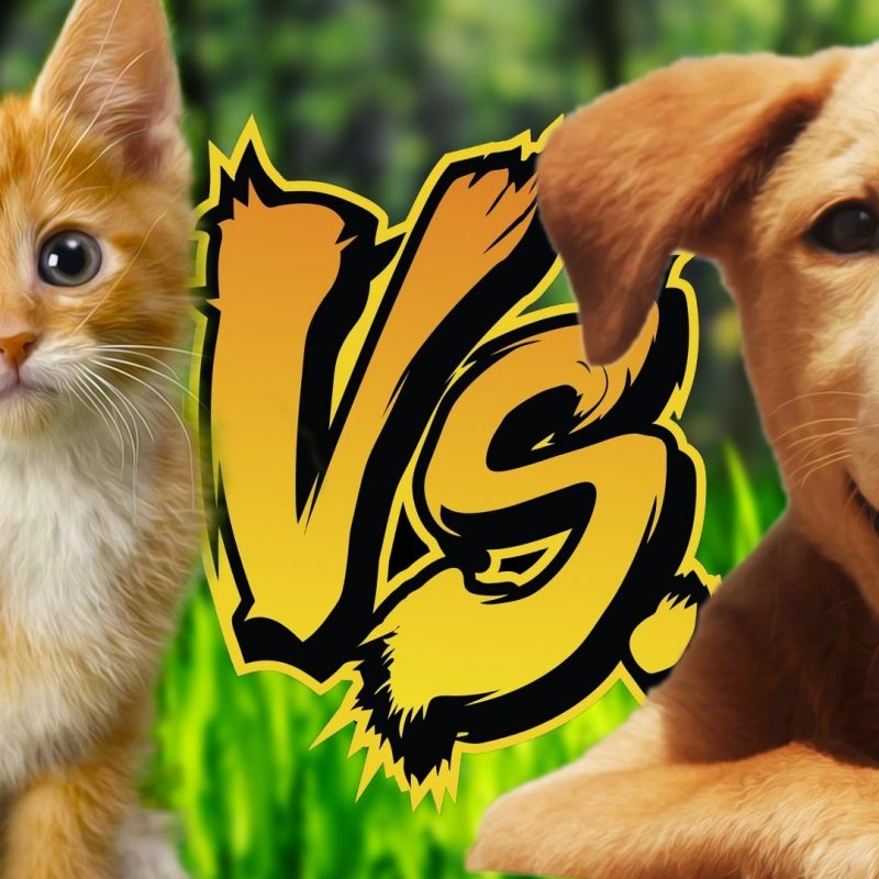 10 Top Kittens And Puppies Pics FULL HD 1920×1080 For PC Desktop 2021 free download kittens vs puppies reading your comments 70 youtube 800x800